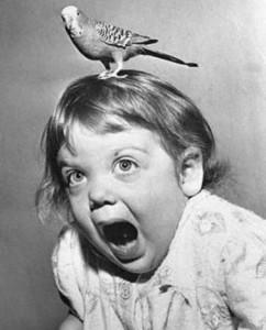 bird:girl image